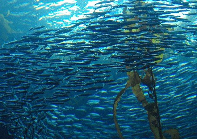Banco de peces (imagen referencial)
