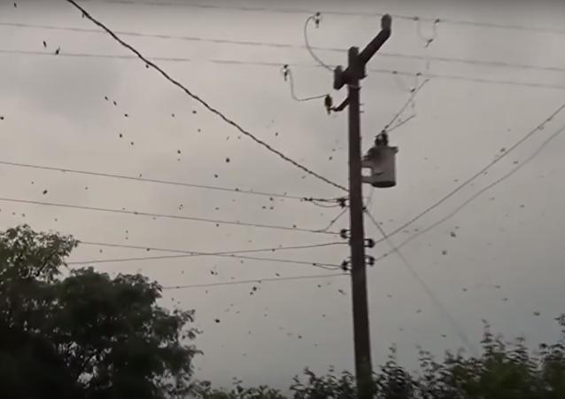 Vídeo espeluznante: las arañas se apoderan de los cielos