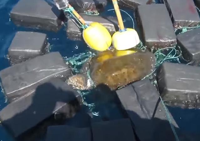 Una tortuga queda atrapada en un 'paraíso' de cocaína en el Pacífico