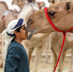 El festival de camellos celebrado en el desierto