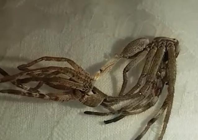 Un alien entre nosotros: el vídeo más escalofriante de arañas que habrás visto jamás