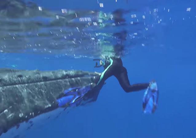 Una heroica ballena protege a una bióloga del ataque de un tiburón