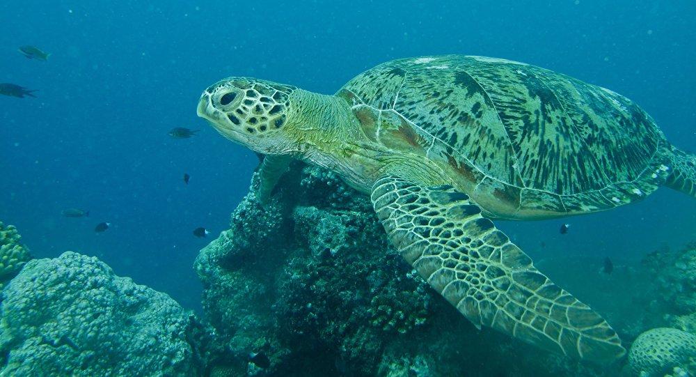 Una tortuga verde