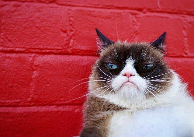 Grumpy Cat, gato celebridad en internet