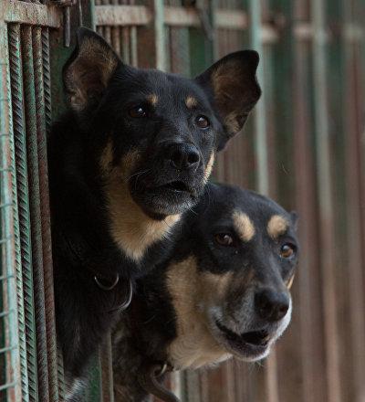 Un refugio de perros en Moscú