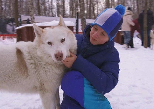 Perros husky ayudan en Moscú a menores con trastornos de desarrollo