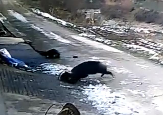 Un jabalí salvaje ataca a unos aldeanos en China