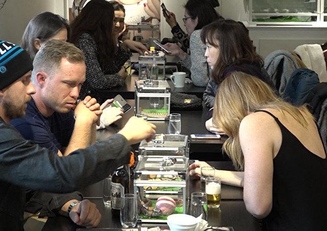 Experiencia 'no para cobardicas': un café en compañía de serpientes