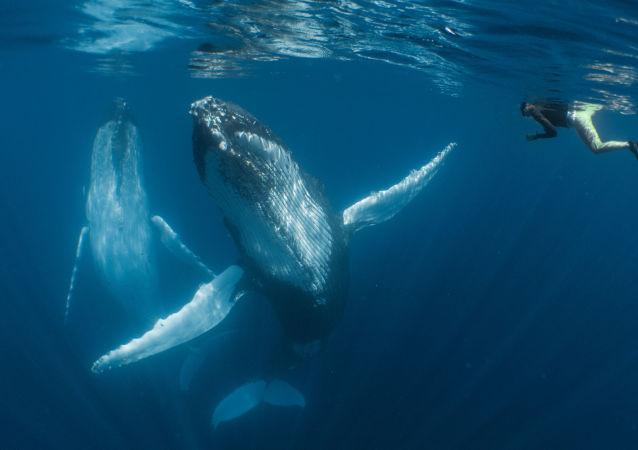 El mundo misterioso de las aguas profundas