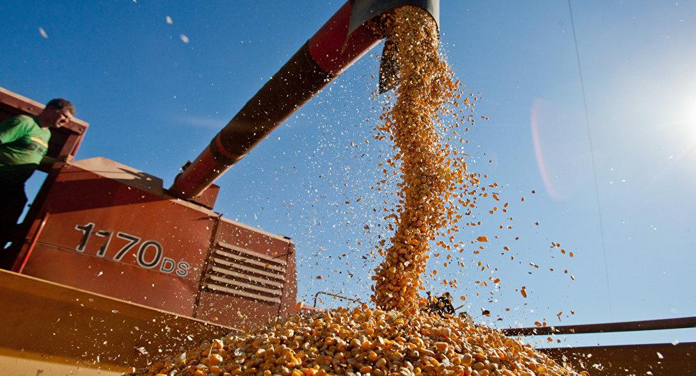 Producción agraria en Brasil