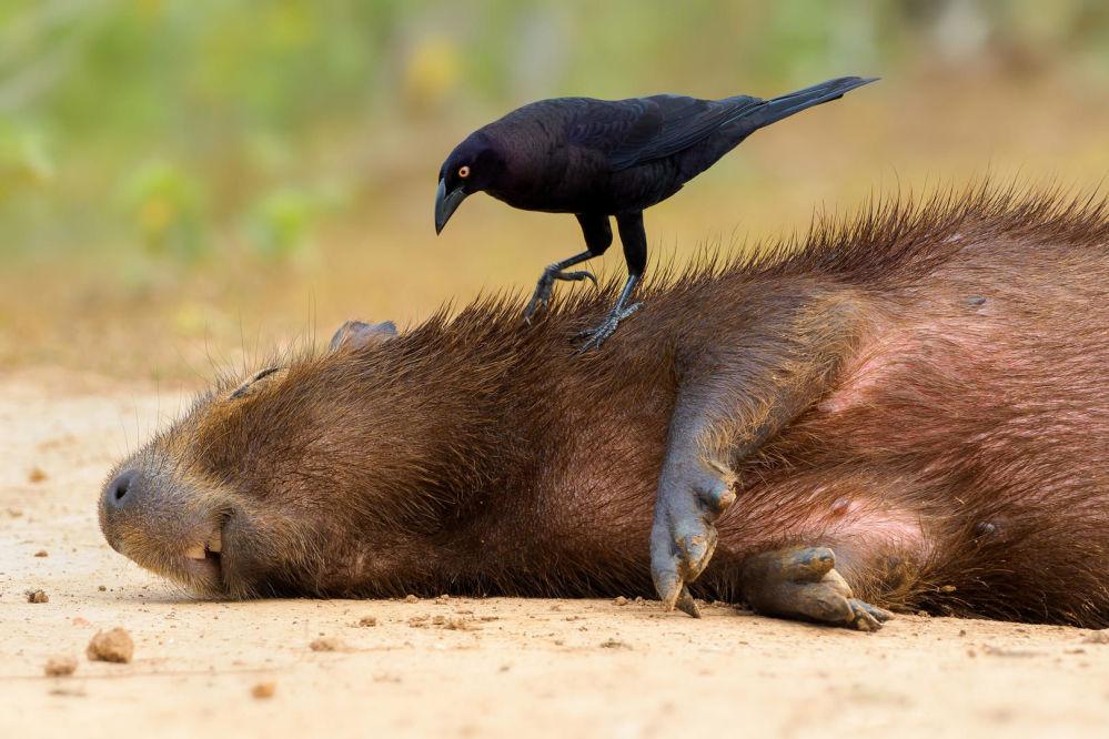 Reyes de la libertad: la belleza y agilidad de los pájaros, desde una perspectiva única