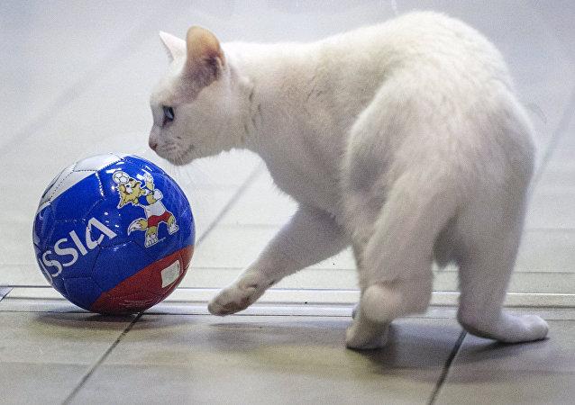 El gato Aquiles