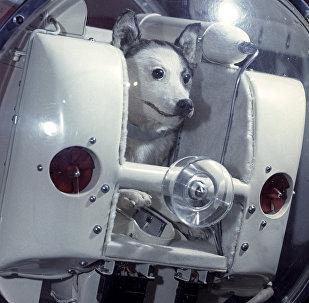 Laika, perra cosmonauta, imagen referencial
