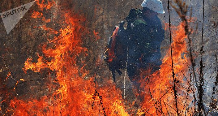Incendio en los bosques del Lejano Oriente de Rusia