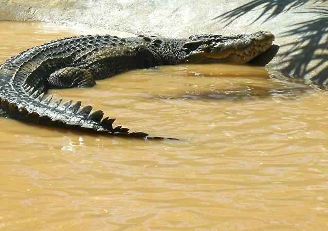 Lolong, el más grande cocodrilo jamás registrado