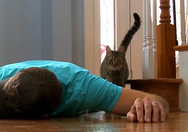 Un hombre se hace el muerto para ver cómo su gato y perro reaccionan