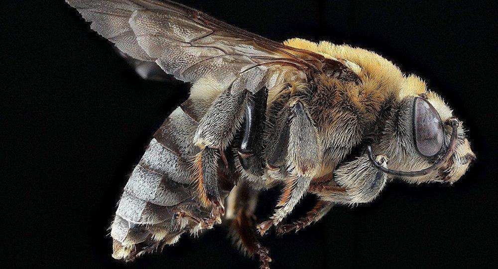 Una abeja, imagen referencial