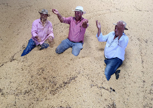 Una granja de soja en Brasil