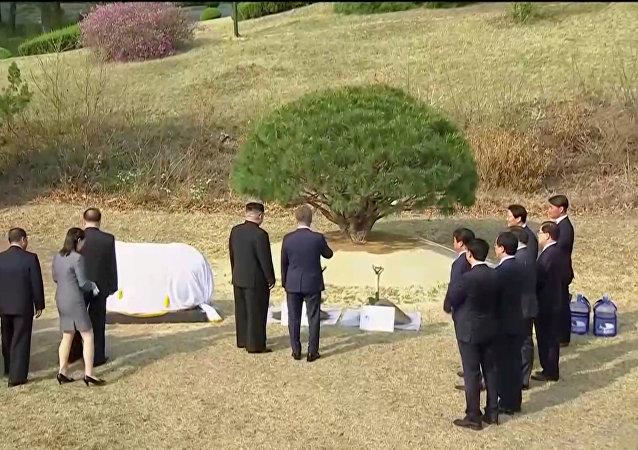 El líder de Corea del Norte, Kim Jong-un, y el presidente de Corea del Sur, Moon Jae-in plantan un árbol en la línea de demarcación