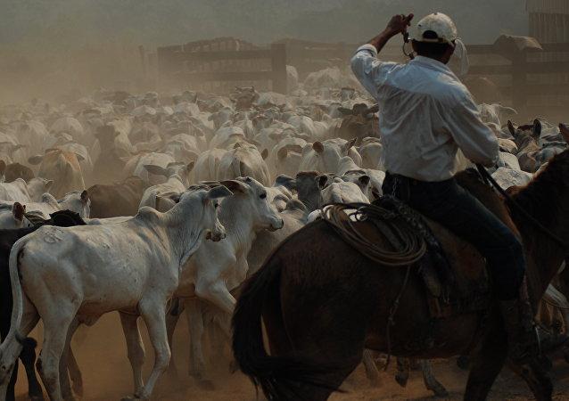 Banco de Brasil confía en el sector agropecuario para salir de la crisis