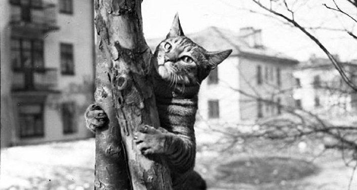 Animales heroicos de la II Guerra Mundial