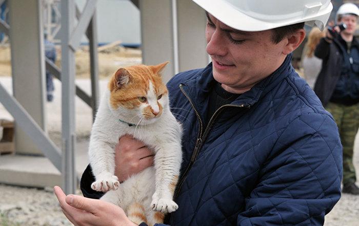 Resultado de imagen para el gato inspector del puente de crimea