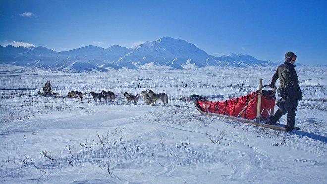 Las carreras de trineo con perros de Iditarod son el evento invernal más popular de Alaska