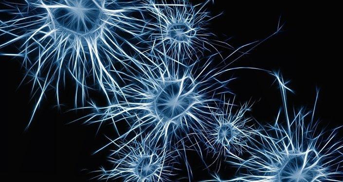 Neuronas (imagen referencial)
