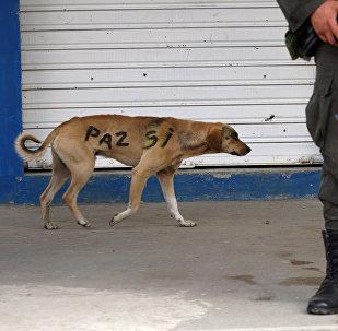 Un perro con las palabras paz sí en su lado en Colombia