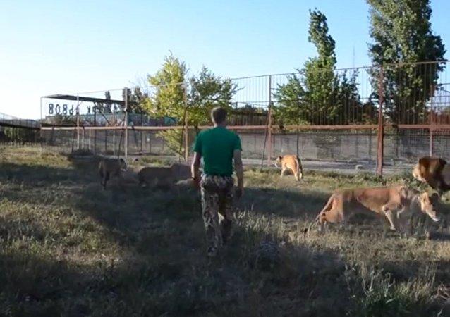 No me importa que seas un león: el dueño de un safari adiestra a mamíferos con… una zapatilla