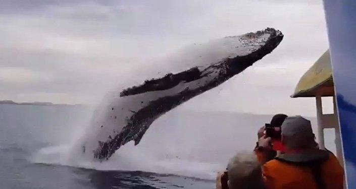 ¡Di hola! Una ballena impresiona a turistas con un salto acrobático