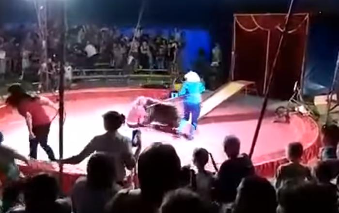 Un oso ataca a su domador en Rusia