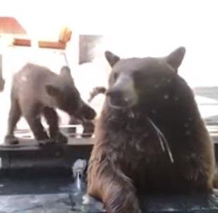 ¡Fuera de mi jardín!: este pequeño perro guardián logró echar una familia de osos