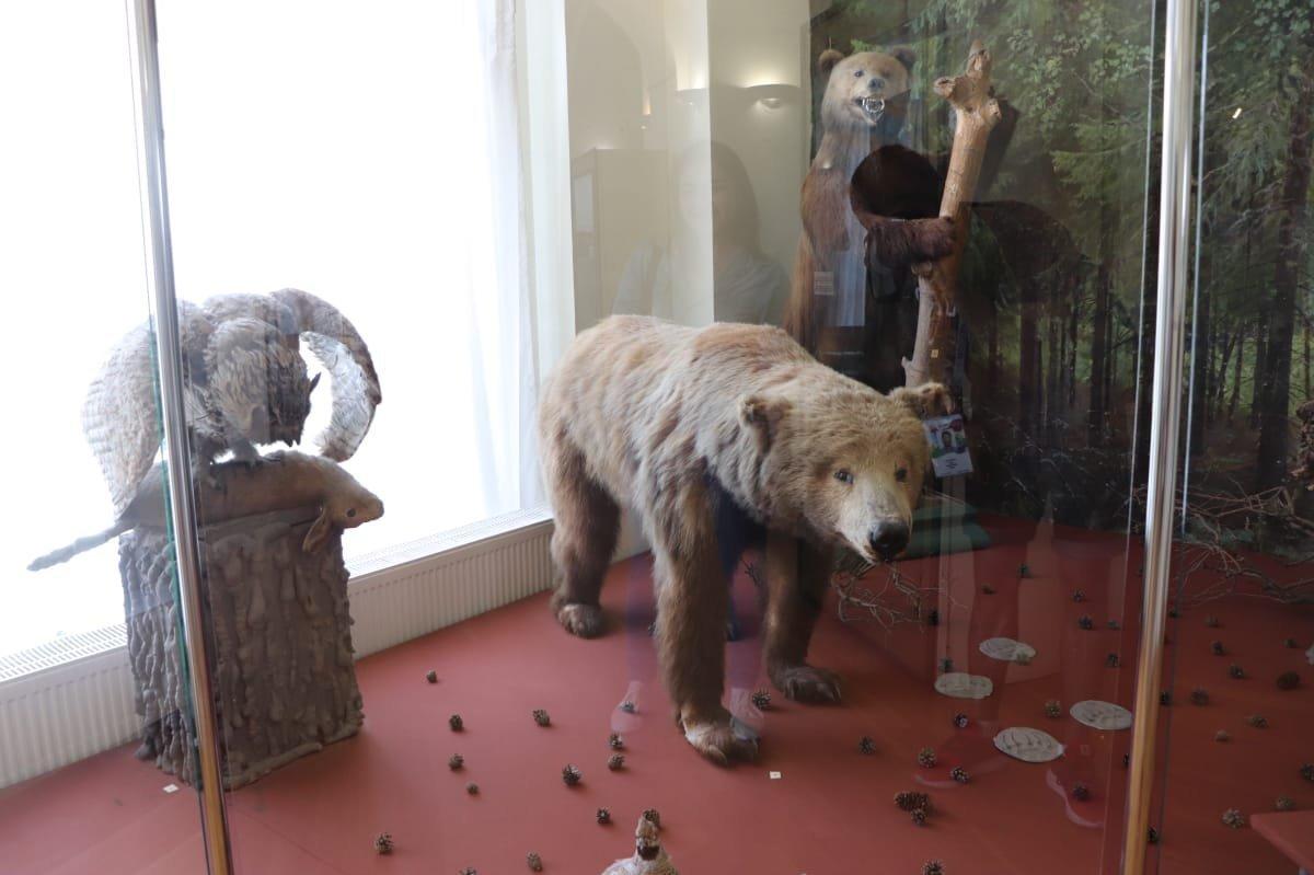 Osos ruso en el Museo de Historia Natural de Kazán