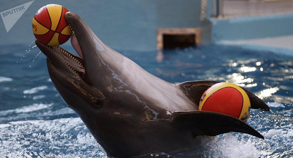 Delfín en el gran delfinario de Sochi en el Parque Riviera (Archivo)