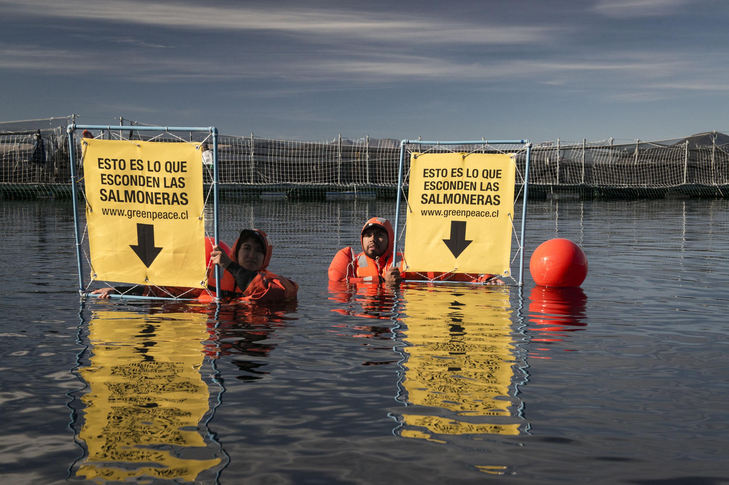 Activistas de Greenpeace en salmonera al sur de Chile