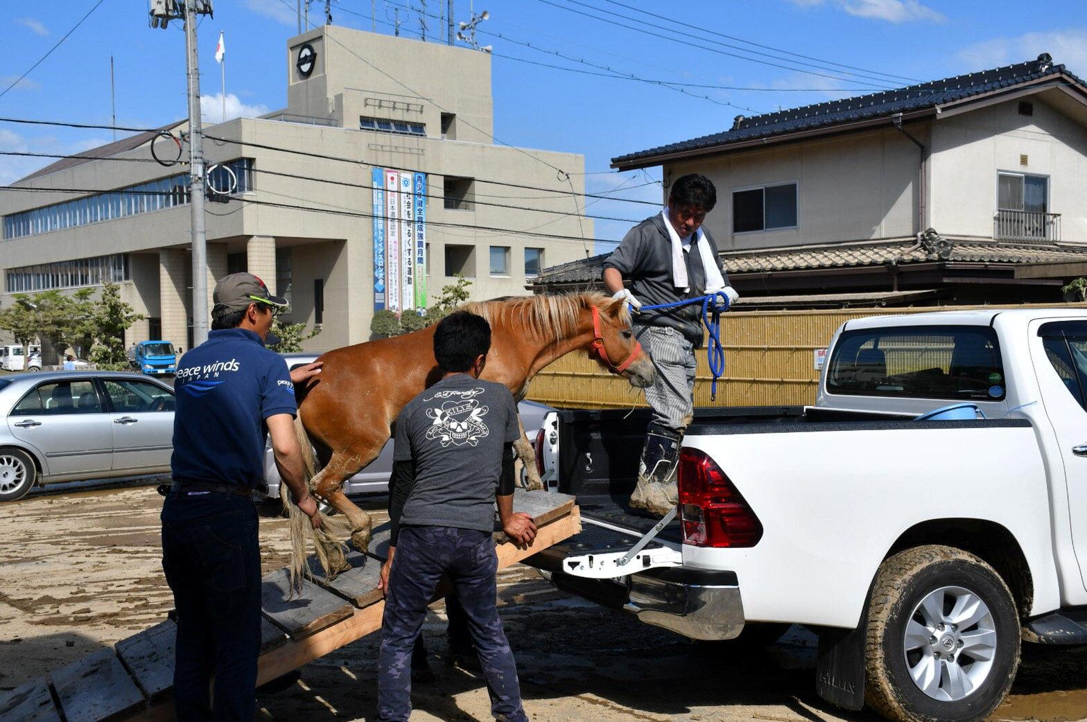 Una yegua rescatada del tejado de una casa tras fuertes inundaciones en Japón (9 de julio 2018)