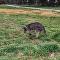Un canguro se come una planta en Australia y pierde el control por completo