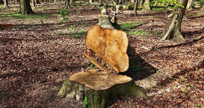 Un árbol cortado (imagen referencial)