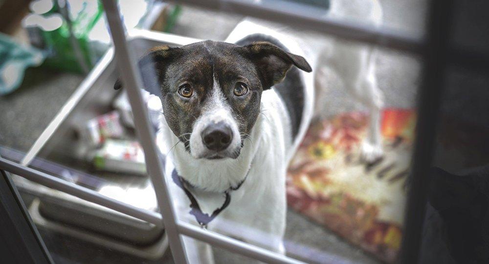 Perro abandonado espera a familia durante un mes tras incendio