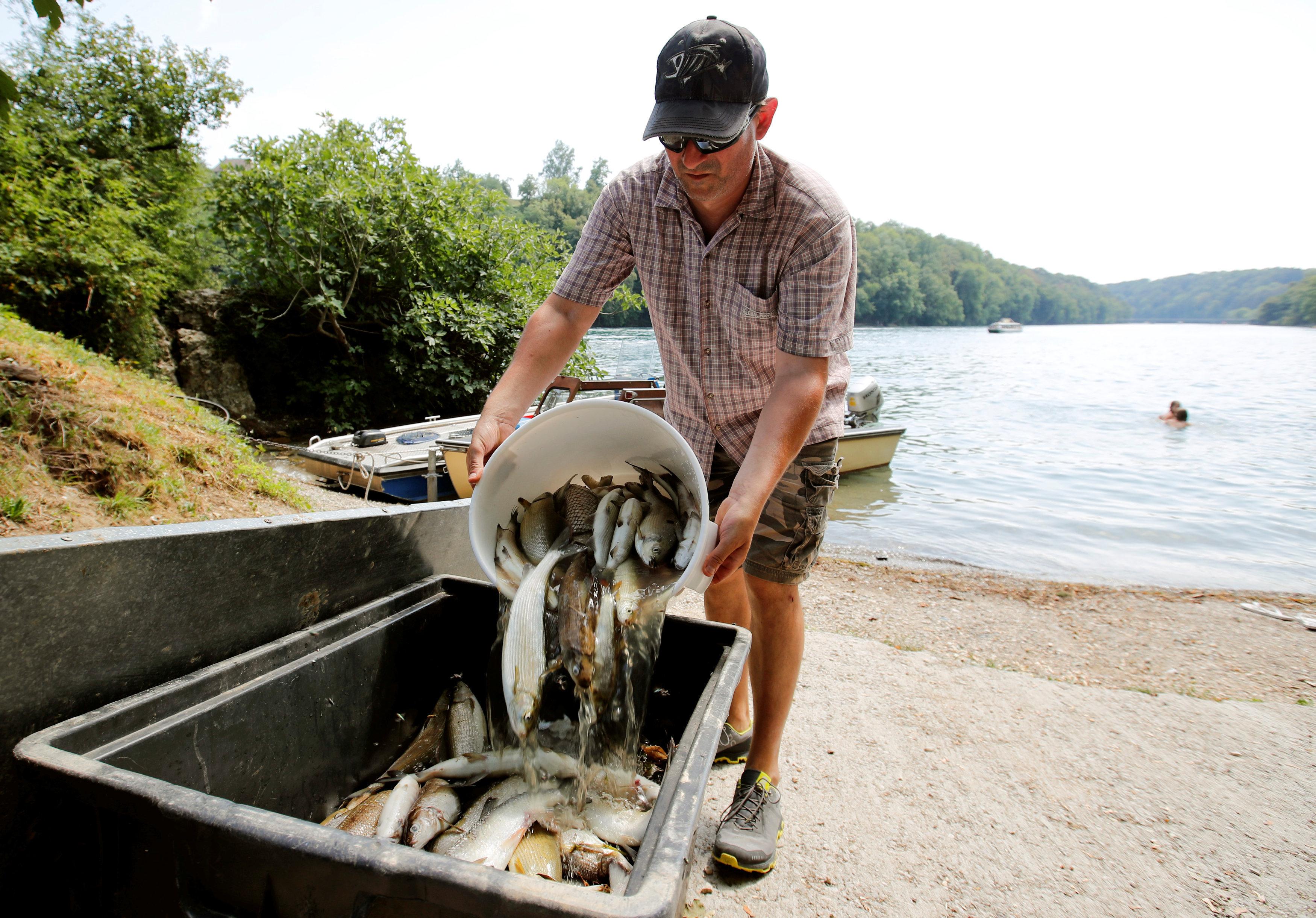 Un hombre retirando los peces muertos de un río en Suiza