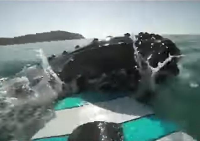 Un surfista choca con una enorme ballena y esto es lo que sucede