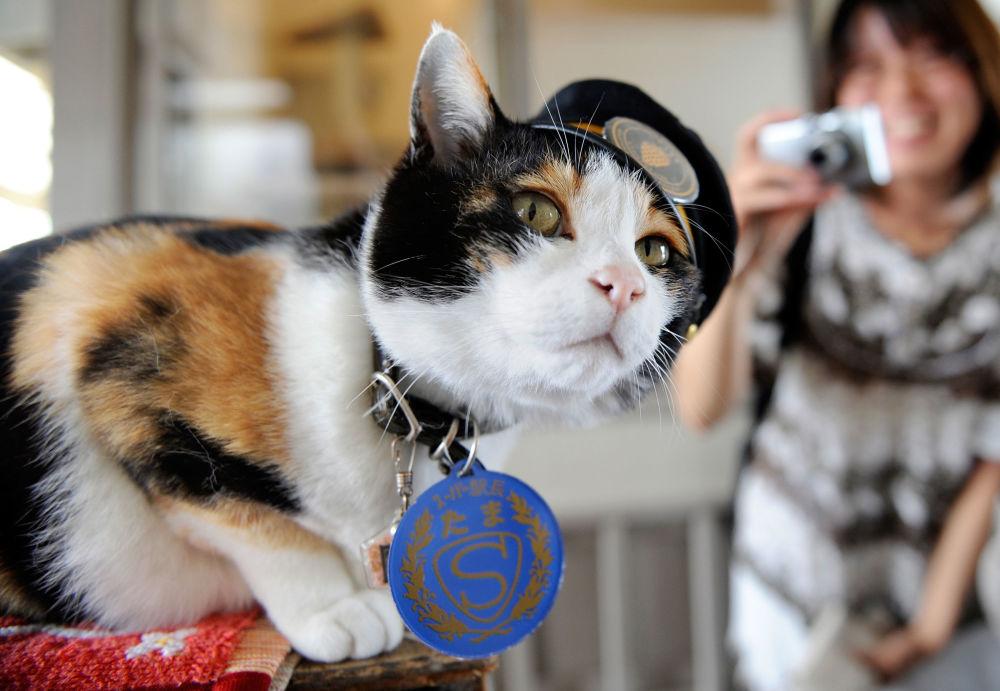 Conoce a los gatos más famosos del mundo