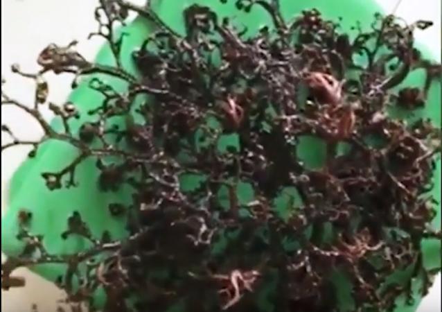 Capturan una extraña criatura marina con tentáculos en Vietnam