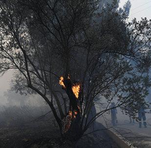 Incendio forestal en Eubea