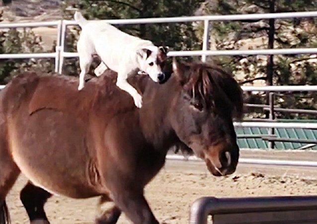 Un jinete canino sorprende a todos con sus trucos