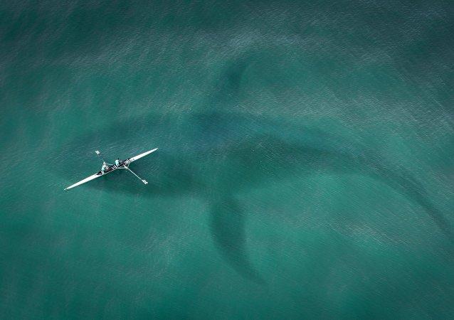 Silueta de un tiburón (imagen referencial)