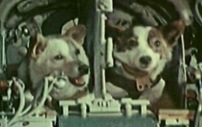 Belka y Strelka, las perritas que conquistaron el espacio hace 58 años