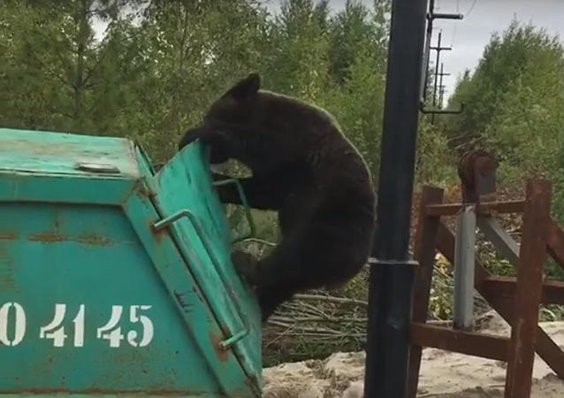 Un oso contra un contenedor de basura... ¿quién será el vencedor?