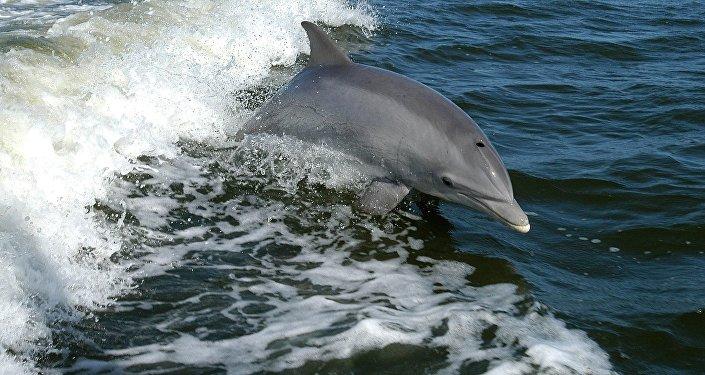 Un delfín, foto de archivo